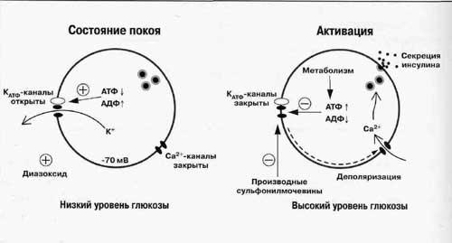 4 представлена схема секреции
